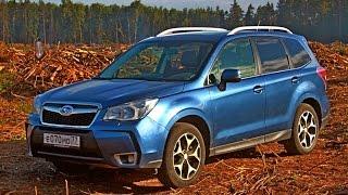 Subaru Forester на off road (2014). Горькая правда о подмосковном лесе