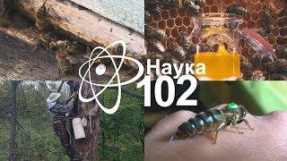 НАУКА -102 Жизнь и смерть в мире пчел