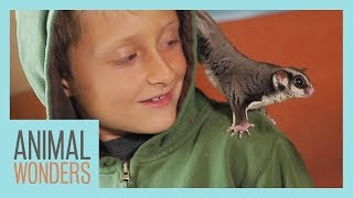 Training 3 Sugar Gliders At Once!