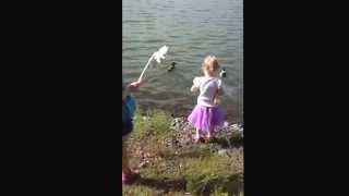Feeding The Ducks At Staats Lake.