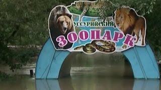 Тяжелейшее наводнение в Уссурийске: в зоопарке утонули десятки хищников