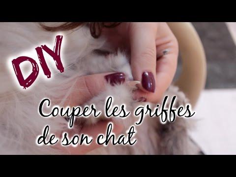 DIY : Comment Couper Les Griffes De Son Chat !