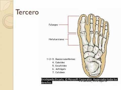 Anatomía del Esqueleto Humano. Trabajo final FLORENCIA CARO. MARTÍN ...