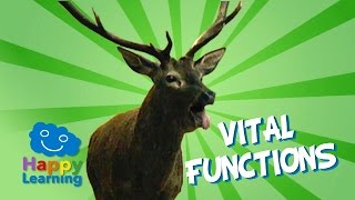 Vital Functions Of Living Things | Educational Video For Kids