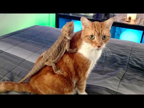 TRY TO STOP LAUGHING  at FUNNY ANIMALS! Best FUNNY ANIMAL compilation