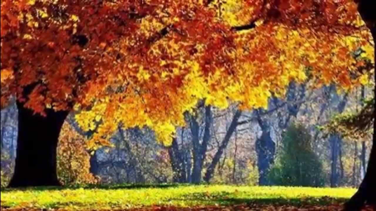 Hermosas Imagenes De La Naturaleza