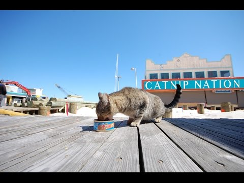 Catnip Nation - The Documentary - OFFICIAL TRAILER