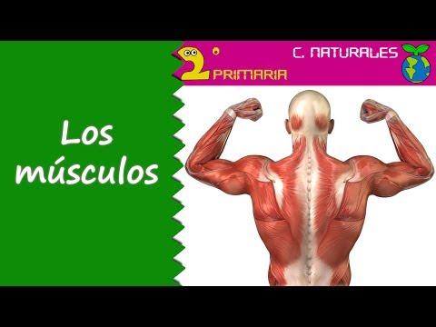 ciencias-de-la-naturaleza.-2º-primaria.-tema-2.-la-musculatura