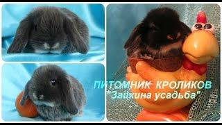 Большой выбор. Кролики домашние декоративные. Видео, фото. Питомник кроликов Зайкина усадьба(Большой выбор. Кролики домашние декоративные. Видео, фото. Питомник кроликов