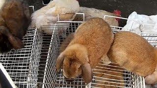 Самые выгодные кролики для продажи на базаре