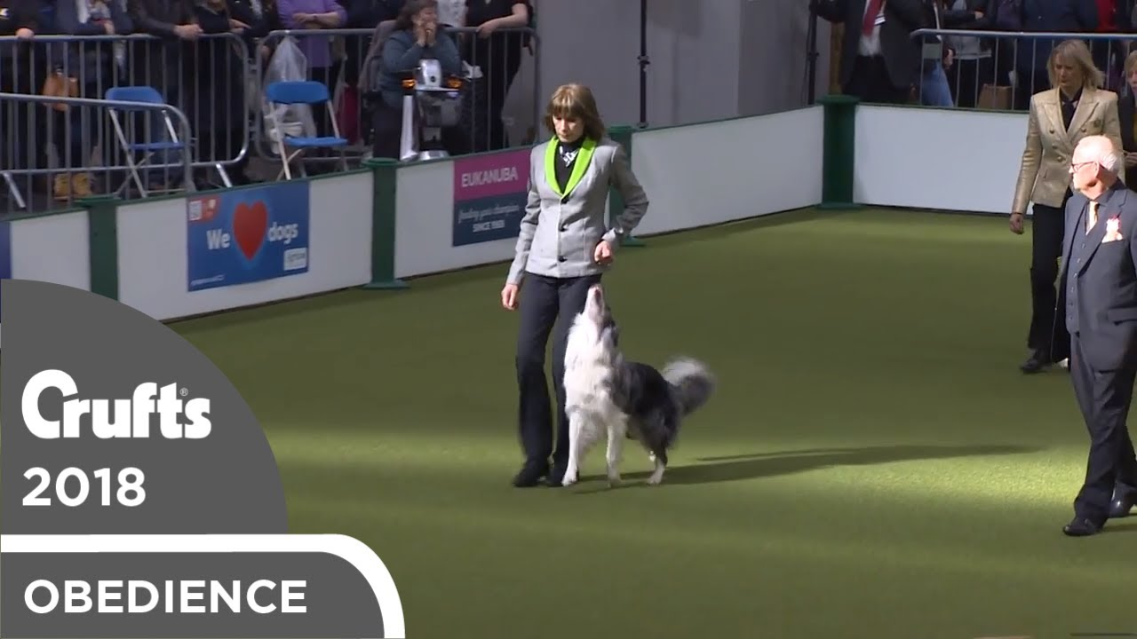 Obedience - Dog Championship - Part 14   Crufts 2018