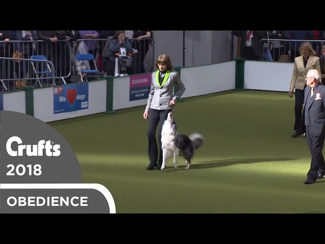 Obedience - Dog Championship - Part 14 | Crufts 2018