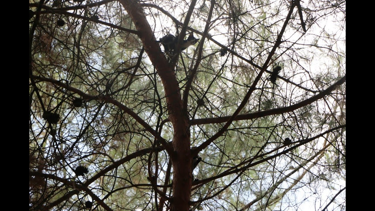 Ağaçta mahsur kalan kedilerin yardımına itfaiye ekipleri koştu
