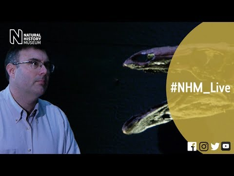 Dinosaur world tour with Paul Barrett | #NHM_Live