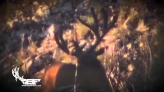 Giant Wyoming Velvet Buck!