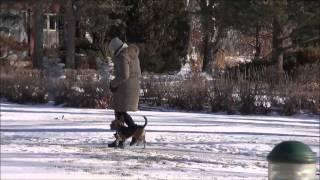 Leo (beagle) Dog Training Demonstration Video