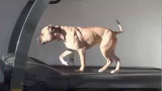 Bella - Boot Camp Level Iii. Advanced Dog Obedience Minnesota