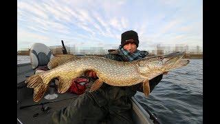 So wird´s gemacht, das moderne Köderfisch Angeln auf Hecht#Unterwasser Livebiss
