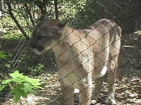 Bergen County Zoo, Van Saun Park, Paramus, New Jersey