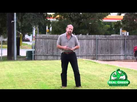 Lawn Care Schedule For Central Texas Real Green Pest and
