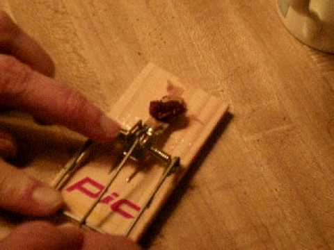 How to set a mousetrap  YouTube