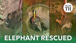 Wild female elephant rescued from well in Dharmapuri