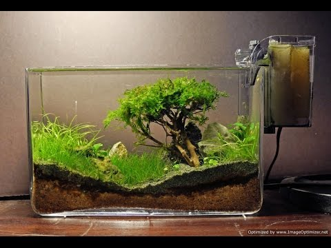 How to grow : Moss trees