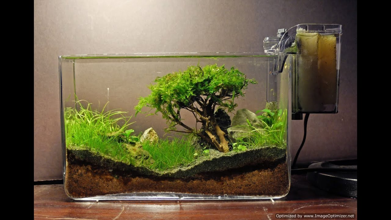 Captivating How To Grow : Moss Trees   YouTube