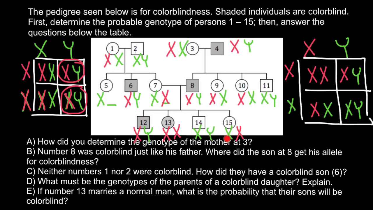 How to analyze and solve pedigree problems fast and easy 3 youtube how to analyze and solve pedigree problems fast and easy 3 geenschuldenfo Images