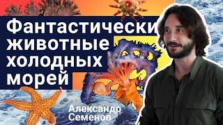 Стань учёным!   Фантастические животные холодных морей - Александр Семенов