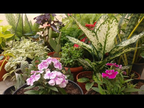 10 Rare Indoor Plants (India) with prices | Plant Haul | Winter Flowering Plant Haul