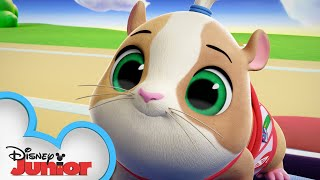 Gil the Guinea Pig Profile   T.O.T.S.   Disney Junior