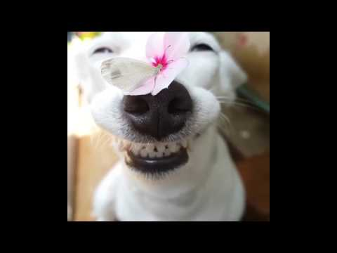 BEAUTIFUL SMILING DOG WITH FLOWER AND BUTTERFLY