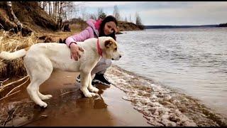 Алабай ПЕРВЫЙ РАЗ видит БОЛЬШУЮ реку Реакция Умы Прогулка с собакой Щенок социализация