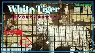 日時:1 月 25日(金) 午前11時00分~ 場所:大牟田市動物園(福岡) ...
