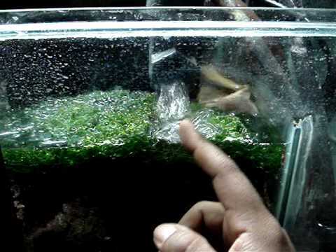 diy sump refugium setup part 2 of 4 youtube