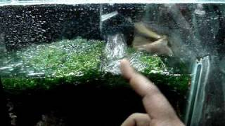 Diy Sump Refugium Setup Part 2 Of 4