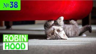 ПРИКОЛЫ 2017 с животными. Смешные Коты, Собаки, Попугаи // Funny Dogs Cats Compilation. Февраль №38
