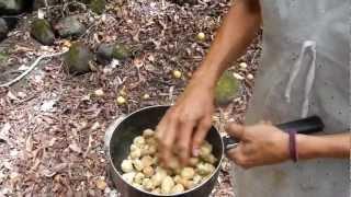 Kukui Nut Oil Preparation