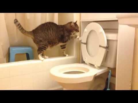 トイレを流す猫トラキチ