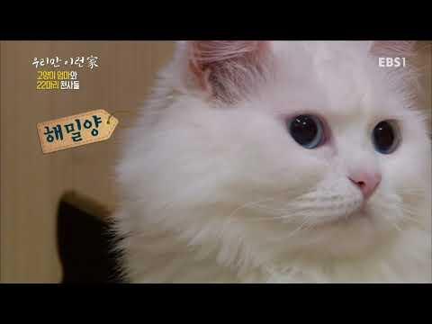 우리만 이런家 - 고양이 엄마와 22마리의 천사들_#001