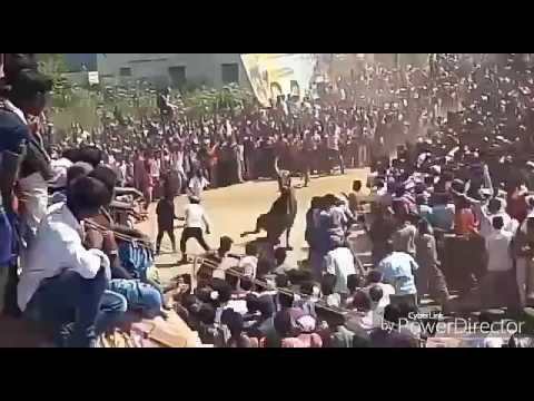 Vaniyaimbadi super star & tata sumo and haveri king