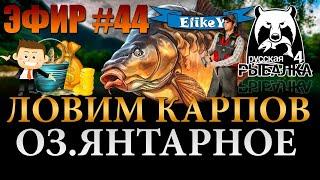 За Карпом Поймаем Трофей Фарм Серебра и Опыта Озеро Янтарное Русская Рыбалка 4 ЭФИР 44