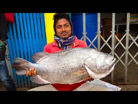 Must Watch Fish Cutting Skills!!! Amazing 10 KG Tripletail Fish Cutting Techniques By A Fishmonger