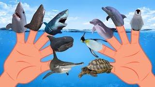 Sea Animal VS Shark Finger Family Nursery Rhyme | Whale Orca Killer Whale Dolphin Octopus Finger