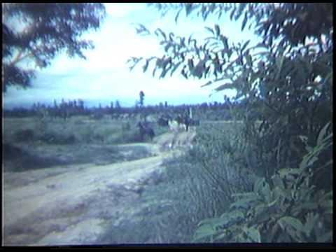 ROYAL THAI ARMY (RTA) PACK MULE SQUADRON