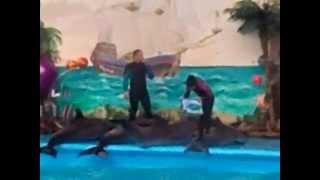 Дельфинарий в Киеве. Тренерованые Дельфины танцуют в бассейне(БЕСПЛАТНО! ЖЕНСКАЯ ОНЛАЙН КОНФЕРЕНЦИЯ: ➡ http://goo.gl/V0dvfm ☝ведущий, тренер, психолог Павел Раков. Совершено..., 2014-08-10T20:56:13.000Z)