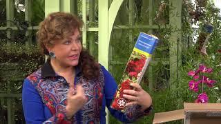 видео Посадочный материал. Многолетние и почвопокровные растения. Молодило.