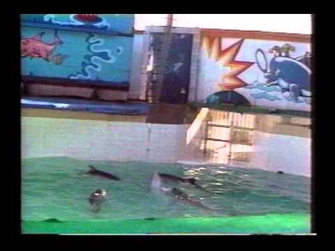 Lolita The Killer Whale: Slave to Entertainment - full movie