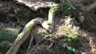 Return to Aokigahara, Part 4